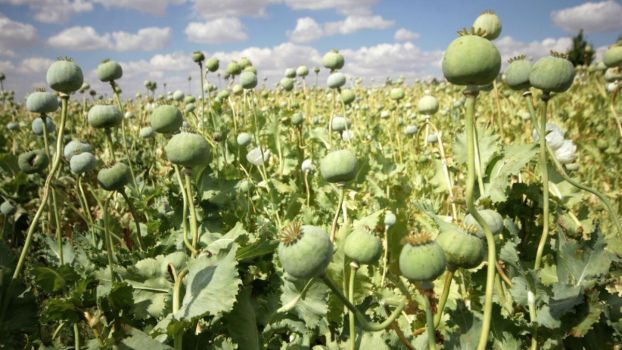 Els EUA i Canadà en alerta pels opiacis