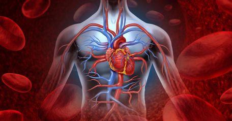 Coneixes la teva edat cardiovascular ?
